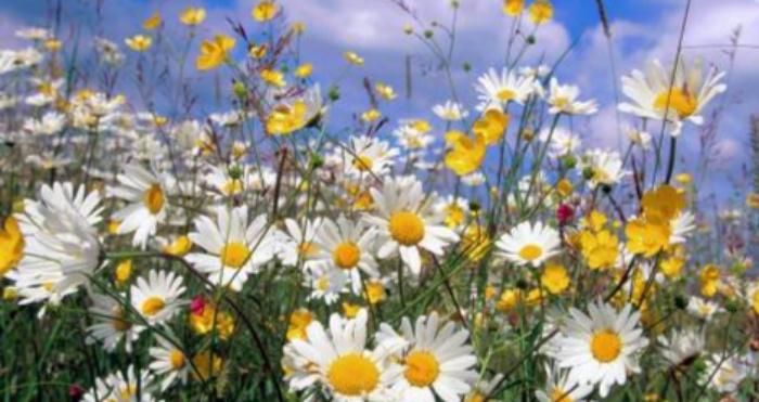 Зелені трави та польові квіти