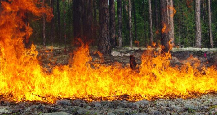 У «Цуманській Пущі» спалахнула пожежа