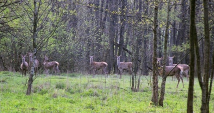 На території Звірівського лісництва діє мисливсько-рекреаційний комплекс