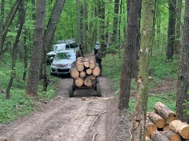 Крадіжка лісу