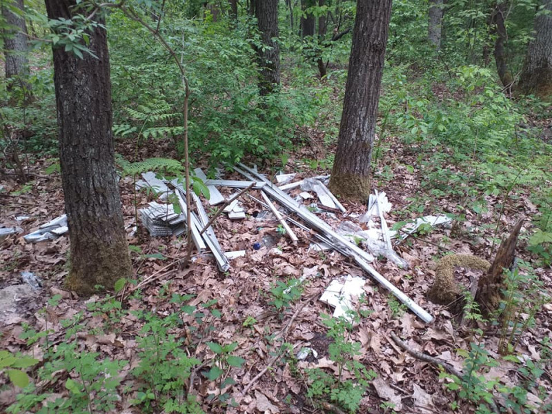 Сміття у лісі