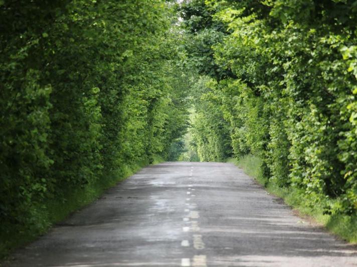 Дорога у лісі