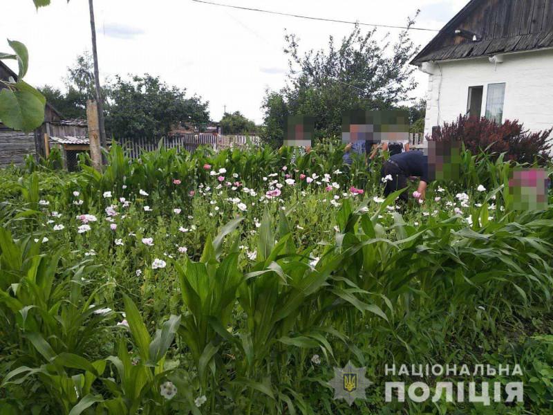 Жителька Ківерцівщини біля свого будинку вирощувала наркотичний мак