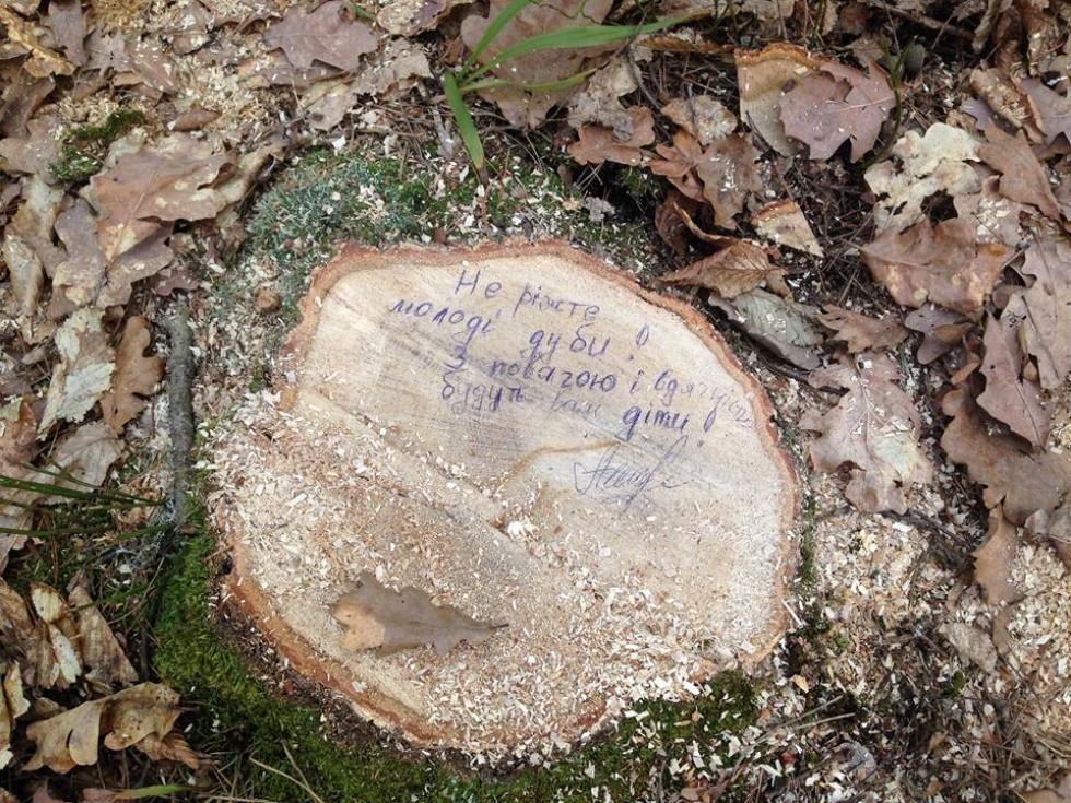«Не ріжте молоді дуби! З повагою і вдячністю будуть вам діти!» - надпис голови сільської ради Алли Гонтар