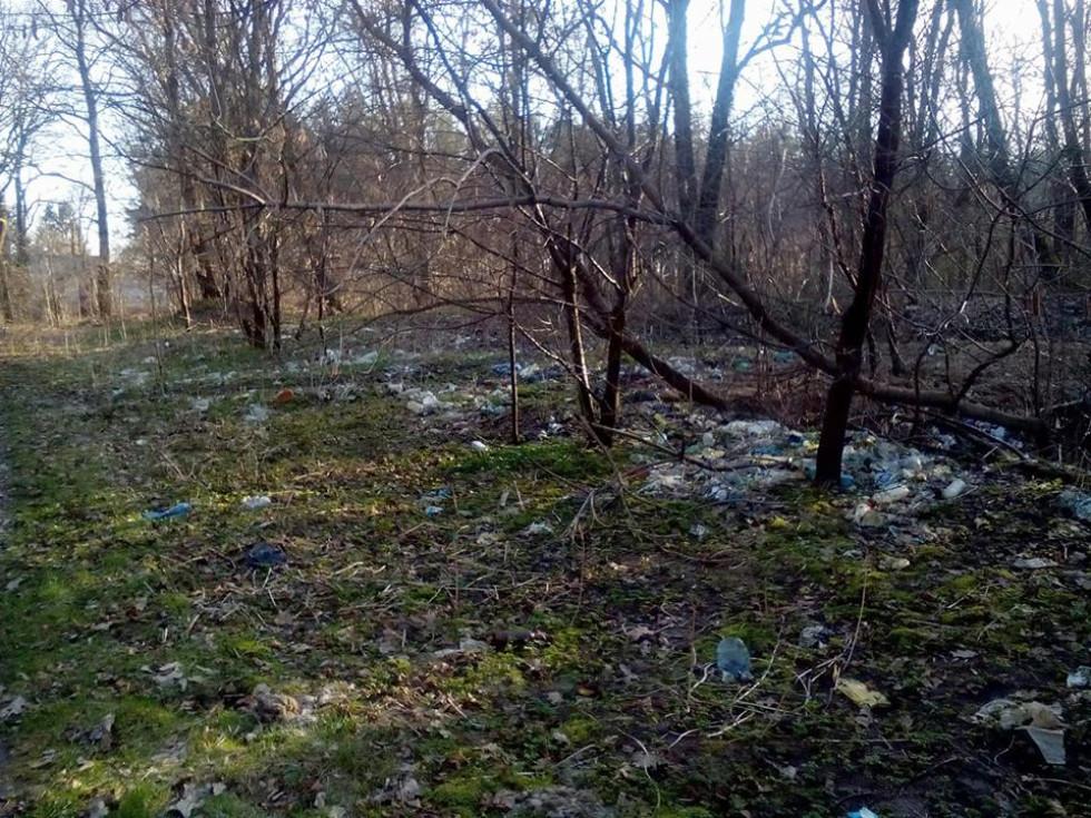 Сміття у лісі села Дачне