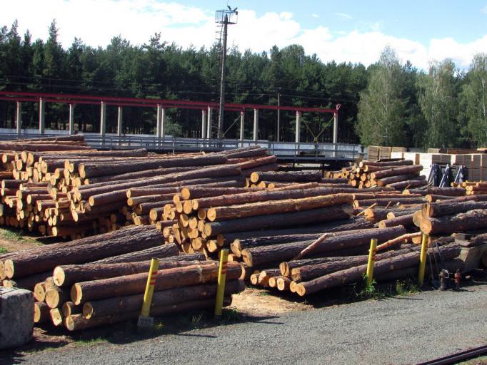 Заготівля лісу