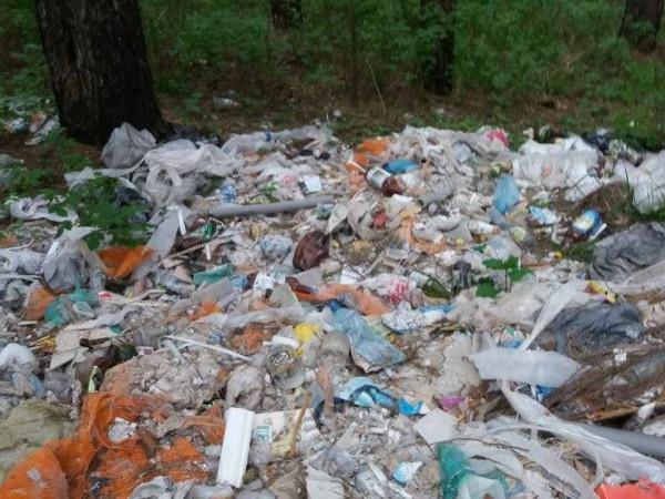 Сміття у лісі села Прилуцьке