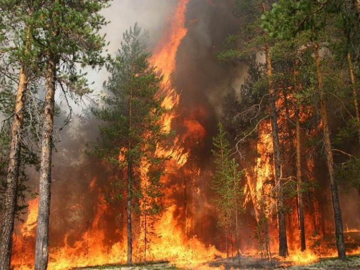 Пожежа в лісі - біда
