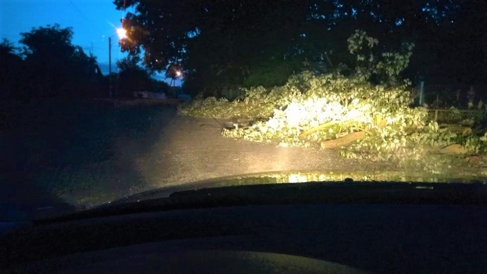 Гілки дерев розкидані по цілій дорозі