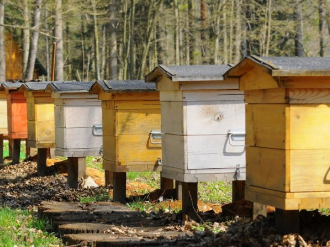 Заготівля меду