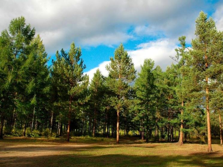 У Ківерцях святкуватимуть День працівників лісу