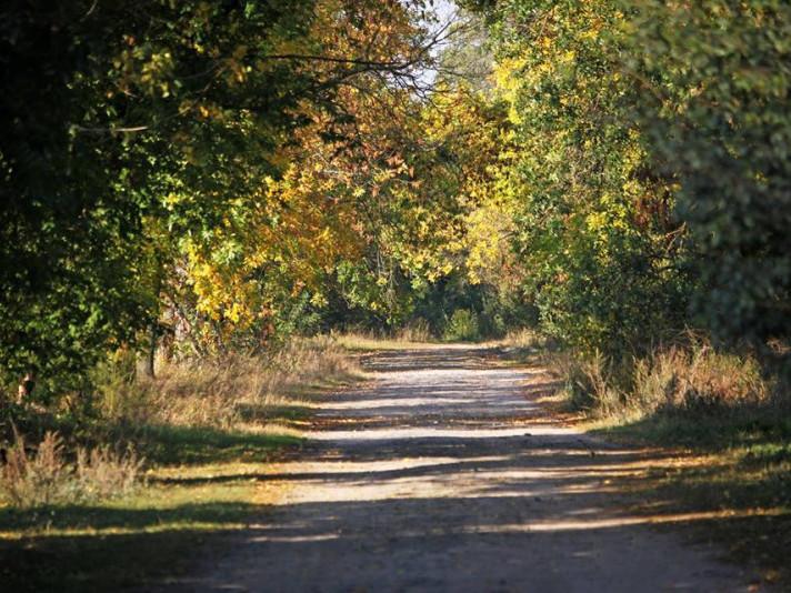 Стежка до лісу у селі Котів