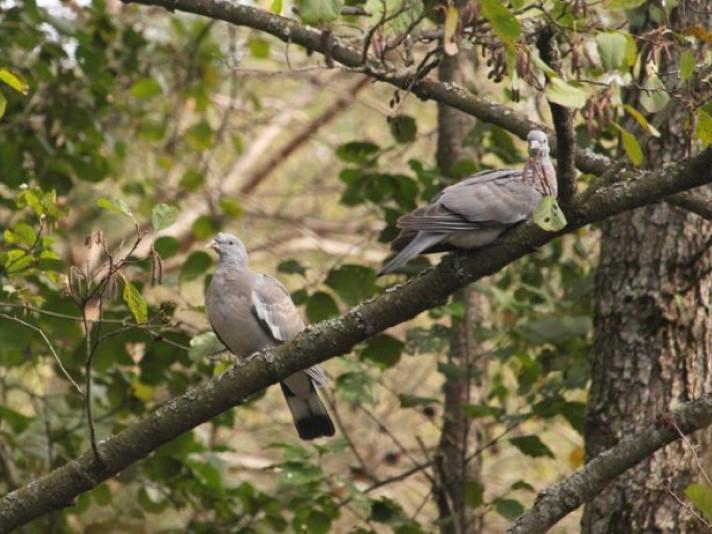 На околиці Ківерців сфотографували пару припутнів