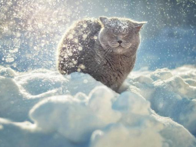 Погода в Ківерцях 10.01.2019