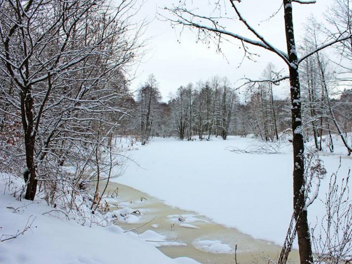 Фото затишного зимового дня поблизу Ківерців