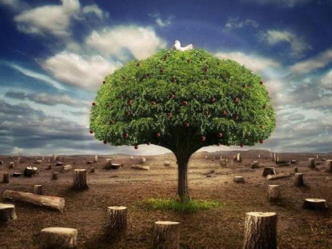 У Ківерцях говорили про боротьбу з незаконною вирубкою лісу