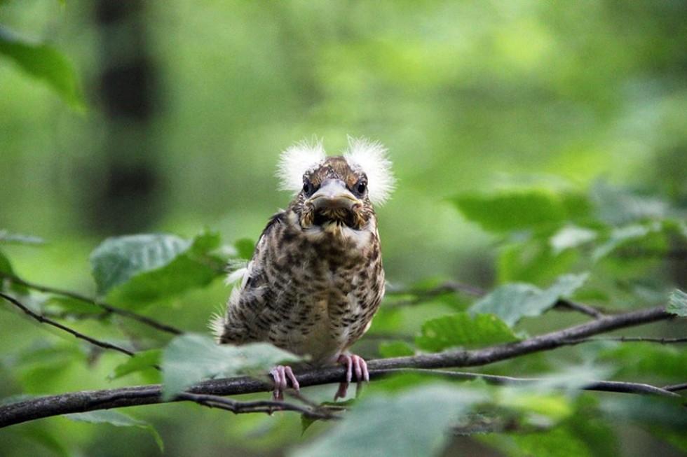 Рідкісна дика птаха