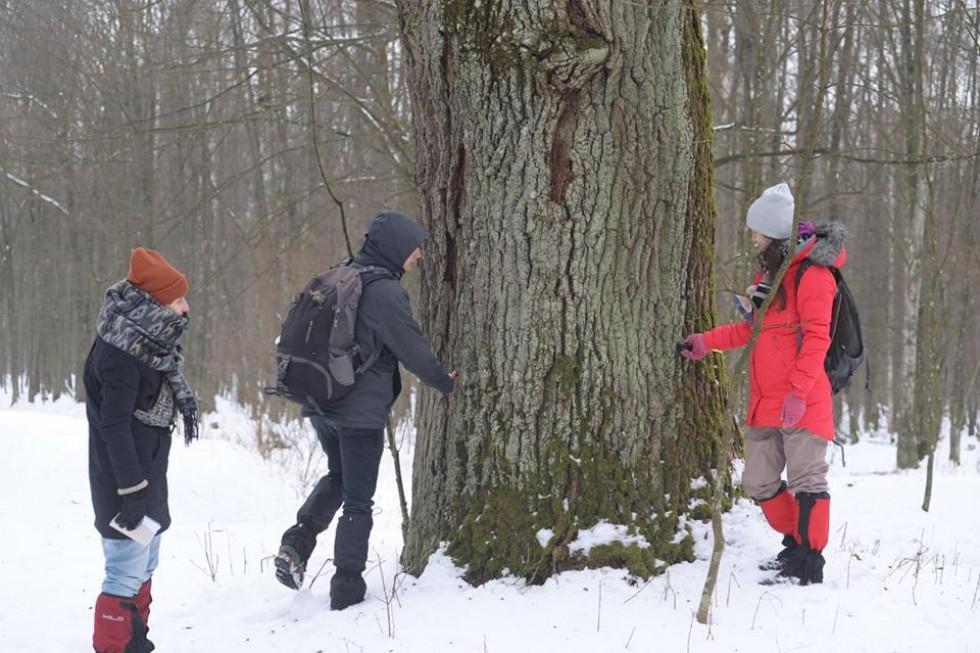 Волонтери вимірюють дерева