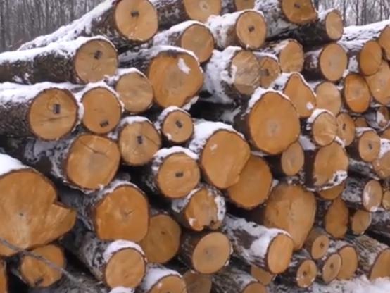 Заготівля деревини у «Ківерцівському ЛГ»