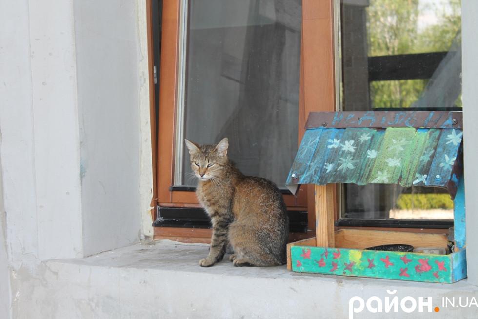 А кіт сидить собі спокійно на підвіконні